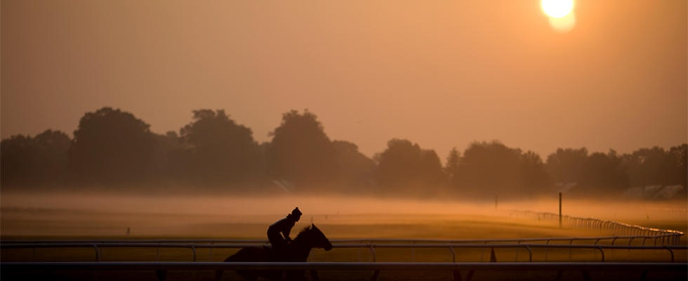 Saratoga morning mist-1